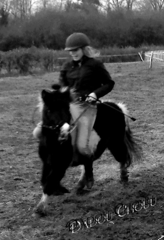 Les chevaux adorent la liberté et le plus vieux, le plus lourd des chevaux de trait se roule dans l'herbe en toute liberté ...