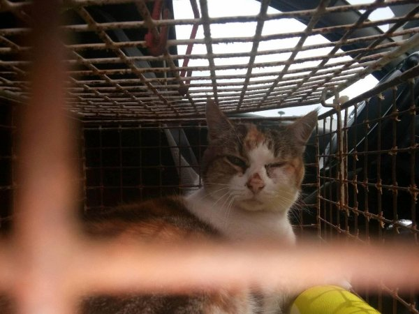 Sauvetage d'une chatte qui risquait l'euthanasie