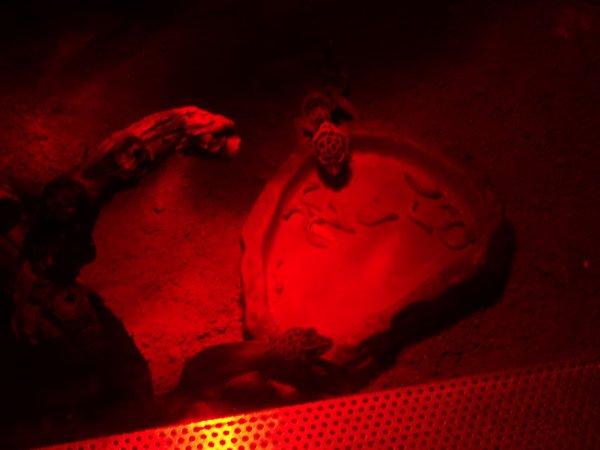 terra des geckos