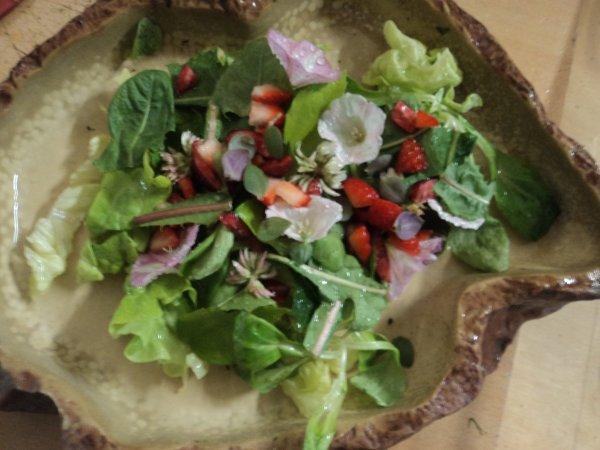 repas 5 étoile pour iguane vert