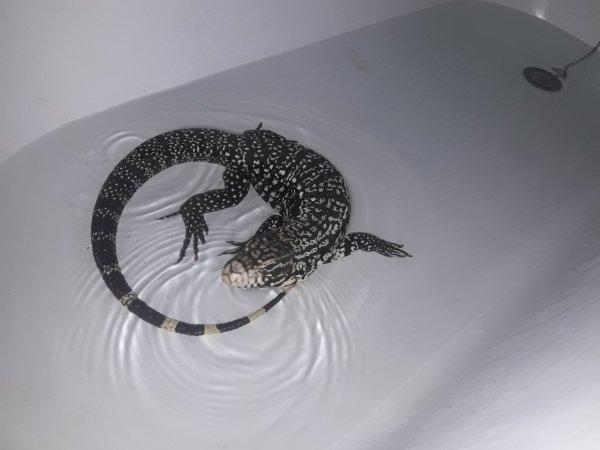 petit bain pour misa (partie 1/3)