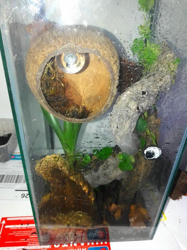 un terrarium refait a neufs pour accueillir une Phelsuma klemmeri femelle qu'un amis me donne :)