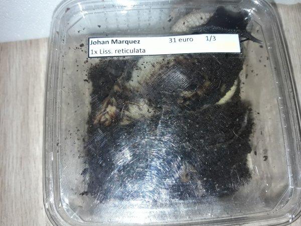 escargot géant d'Afrique  (les nom des espèces sont noté sur les photos :) )