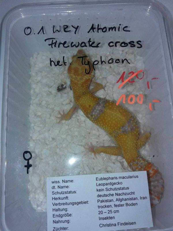 1.1.0 gecko léopard (mutation de chacun sur les photos)