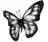 butterflyBabySkin