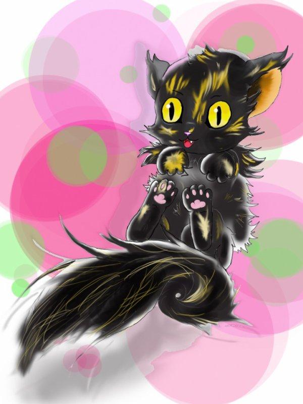 isis cat