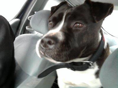 mon chien AXO