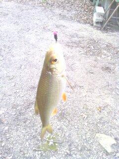 premiers fishs de l année