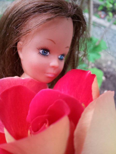 Mignonne allons voir si la rose...