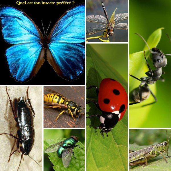 Sondage 6 : Insectes