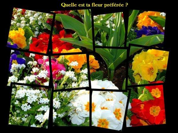 Sondage 12 : Fleurs