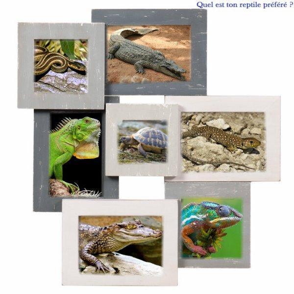 Sondage 29 : Reptiles
