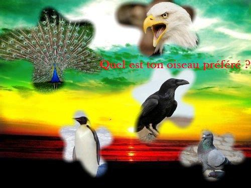 Sondage 38 : Oiseaux