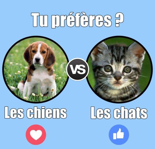 VS 82 : Chien / chat