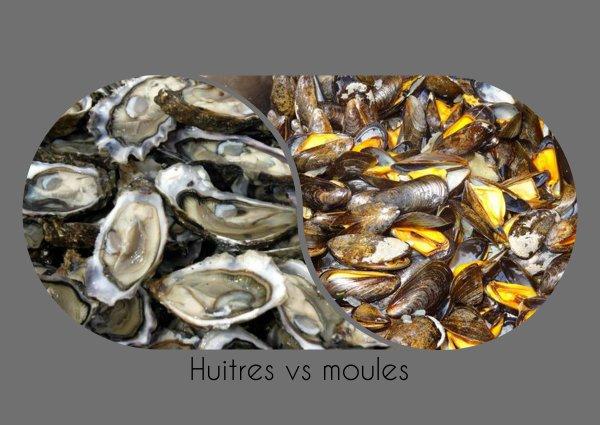 VS 114 : Huîtres / moules