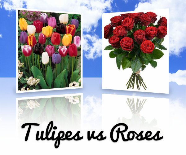 VS 144 : Tulipes / roses