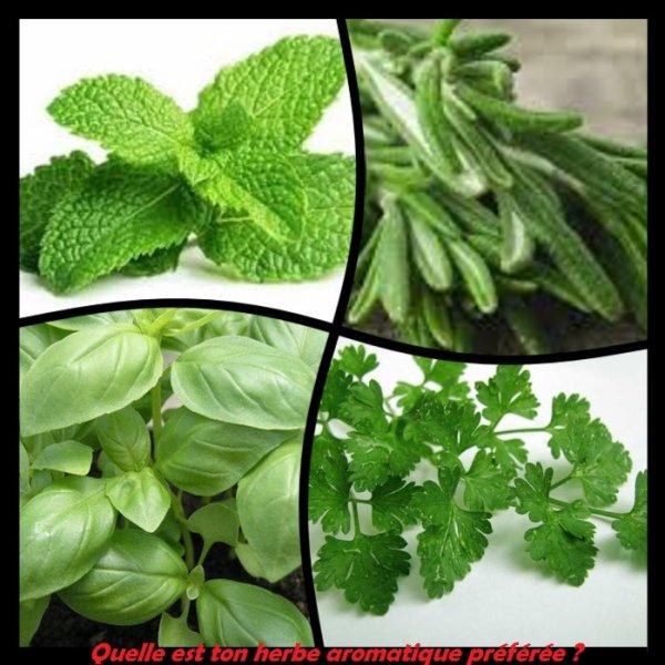 Sondage 177 : Herbes aromatiques