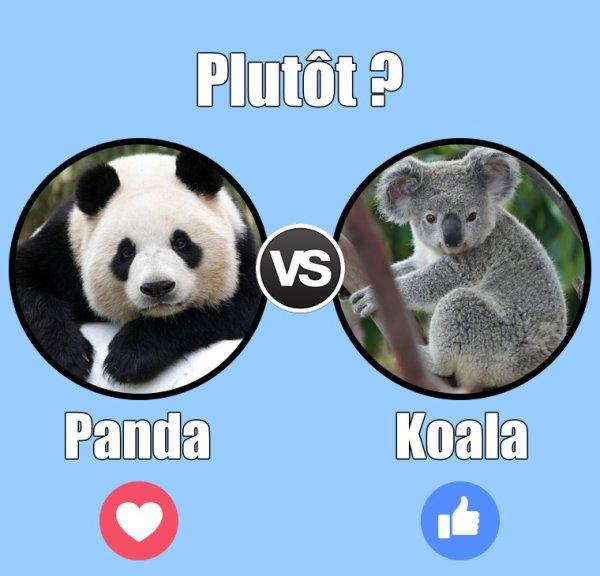VS 163 : Panda / koala