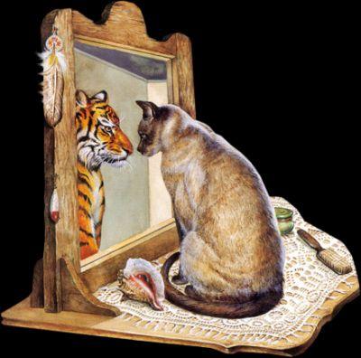 Le chat qui se prenait pour un tigre vero for Se voir dans un miroir