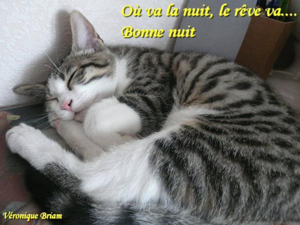 Bonjour - bonsoir - Page 87 2021361427_small_1