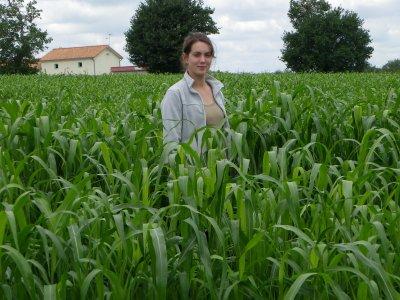 été 2011 : semis de sorgho le 15 juin