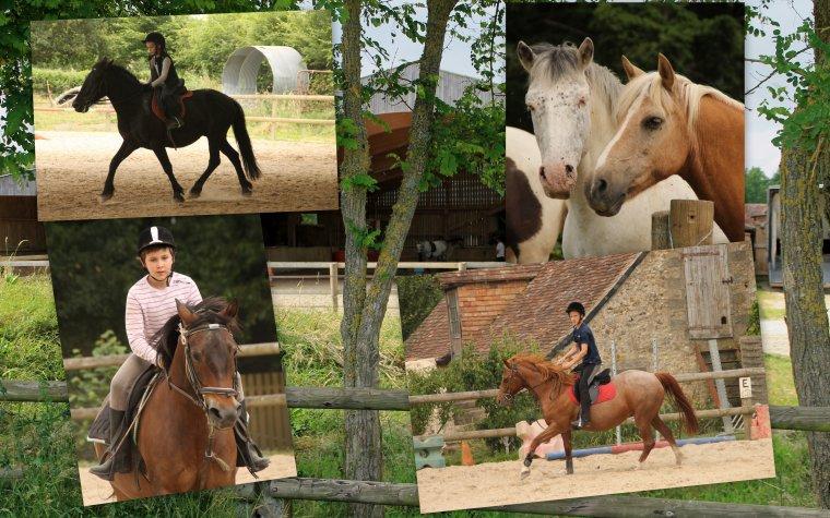 18 & 20 Juin 2015 - Après-midis au Poney Club de la Charnie