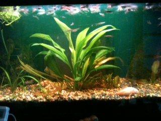 Comment s'occuper d'un aquarium partie 1.