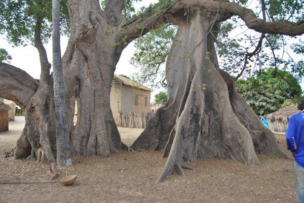L'arbre sacré de Mar-lodj