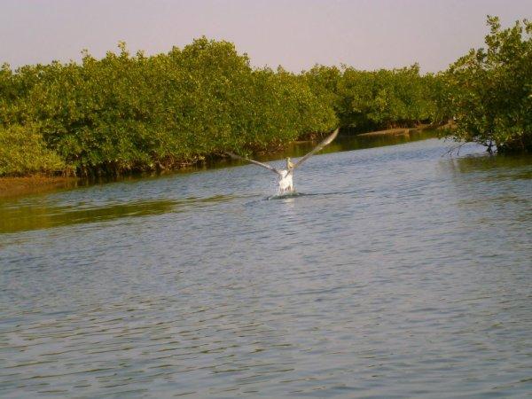 Immergés dans une atmosphère hors du temps sur un îlot de sable vierge oublié, dans le delta du Sine Saloum au Sénégal.