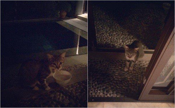 Un adorable petit chat errant est passé nous voir ce soir :)