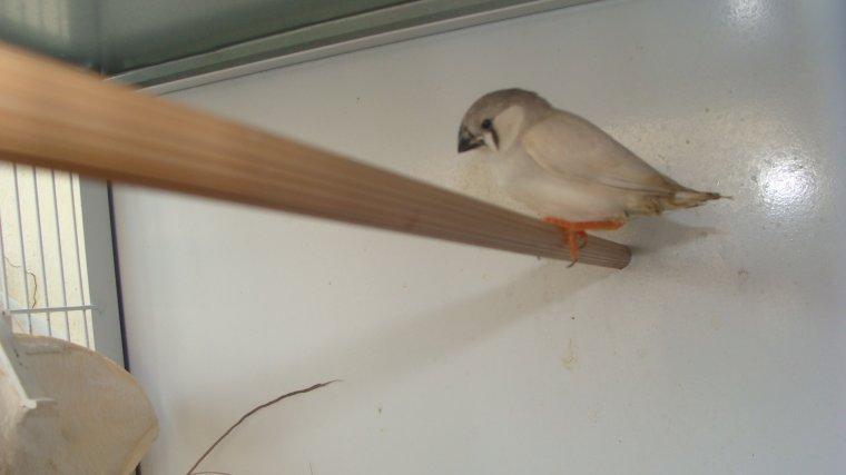 Première sortis du nid
