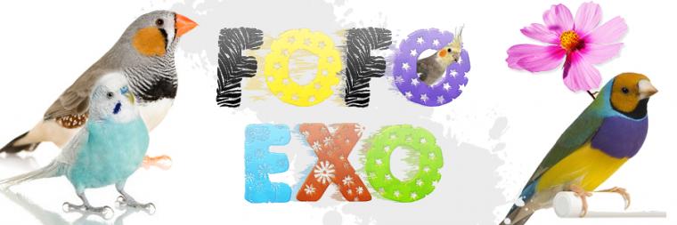 Forum FOFO-EXO