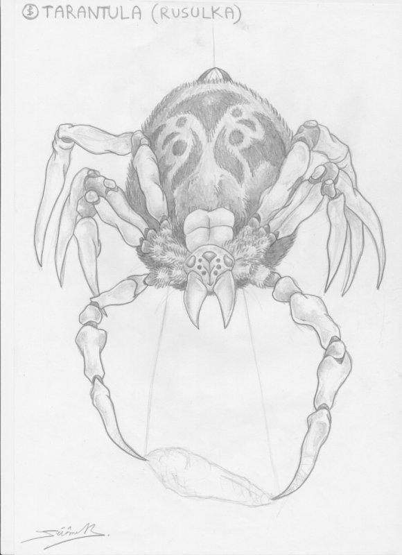 tarantula (rusulka)