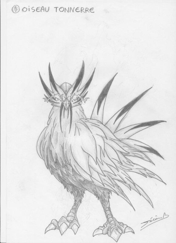 oiseau tonnerre