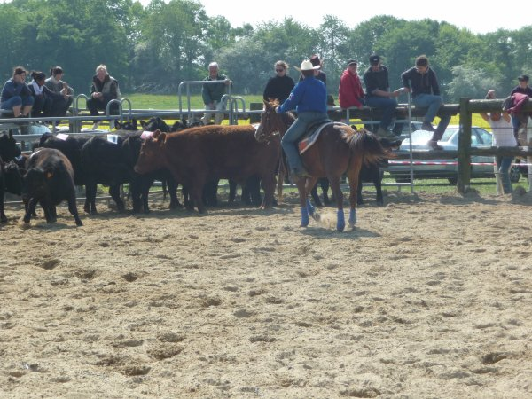 Gendron 2011 avec Easter en cattle et team penning.