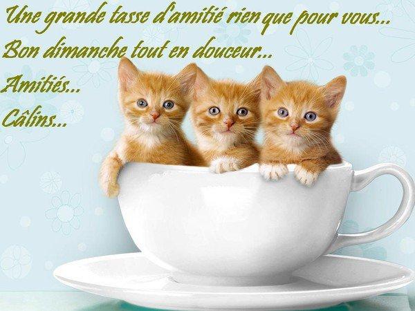 BON DIMANCHE...TT EN DOUCEUR.... !!! BISOUSSS..... !!!!