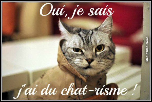Topic des chats - Page 40 3233907199_1_12_XJ9xgsHx