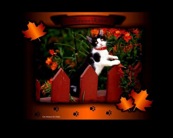 BON VENDREDI...BONNE FIN DE SEMAINE ET JOYEUX HALLOWEEN ( pour ceux et celles qui le fetent !!! ) BISOUSS ♥♥♥