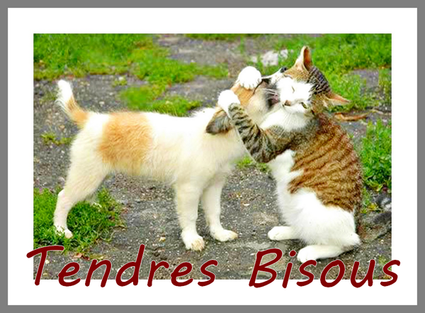 BON MERCREDI  APRES-MIDI A VOUS TOUS ET TOUTES !!! BISOUSSS....♥♥♥