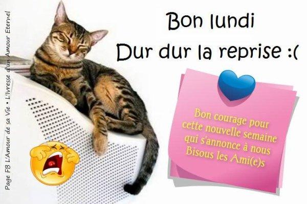 BONNE FIN D'APRES-MIDI EN CE LUNDI ...LE DERNIER DE L'ANNEE 2014 !!! COUVREZ VOUS BIEN....ça CAILLE !!! BISOUSSS ♥♥♥