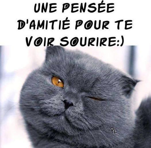 UN PETIT PASSAGE EXPRESS POUR VOUS SOUHAITER UNE BONNE SOIREE SUIVIE D'UNE DOUCE NUIT !!! BISOUS MES AMI(E)S..... ♥♥♥
