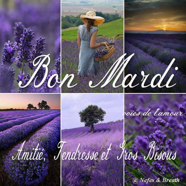 BON MARDI APRES-MIDI....ICI ENTRE PLUIE...VENT .....ET RETOUR DU SOLEIL !!!! BISOUS MES AMI(E)S..... ♥♥♥