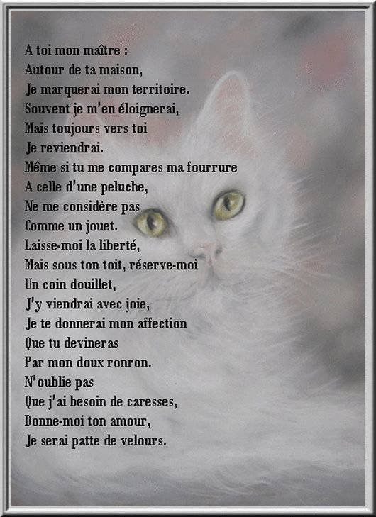 LES CHATS.... GRANDE PASSION DE MA VIE ! (l) (l) (l)