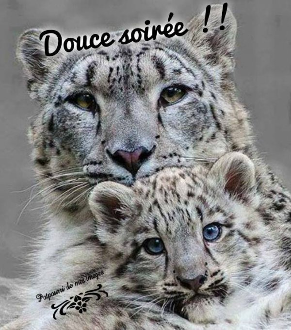 BON DIMANCHE SOIR....BONNE SOIREE ET BONNE FIN DE WEEK END ! BISOUS MES AMI(E)S.... ♥♥♥