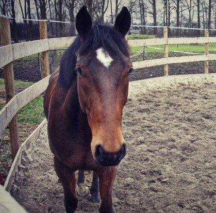 Various horses ∞