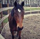 Photo de Horses-----x3