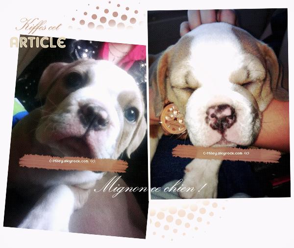 17.01.2012   -  Aujourd'hui Miley a posté sur son compte Twitter, de son nouveau adorable petit chien qui se nomme Ziggy, puis elle a rajouté aussi de nouvelles photos des autres chiens qu'elle a c'est à dire : Lila ; Floyd et Ziggy! Le chien :Oh, il/ elle est adorable *o* Je l'adore, j'aime beaucoup sa tête, j'aimerai beaucoup avoir un chien comme sa ! ^^ Pour toi, tu préfère quel chien de Miley Lila; Floyd ou Ziggy ? Donne moi ton avis, quim'intéresse beaucoup !! Bisous !