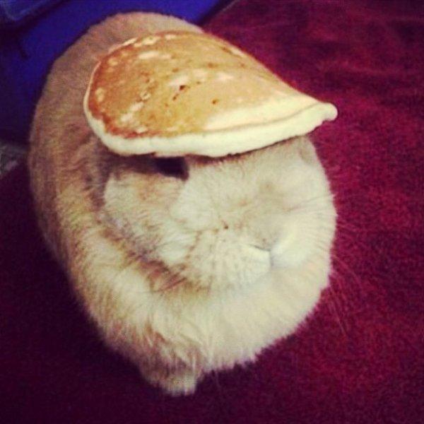 Lapin-pancake