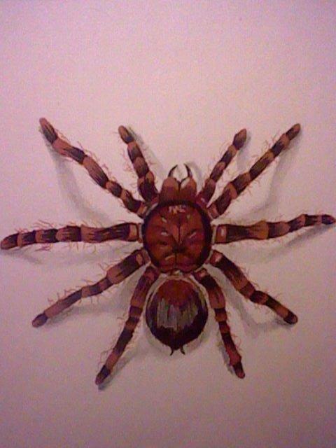 dessin fait par mes soins \\Arachnophobe faites demi tour !!!! //