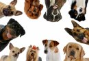 Photo de Eleveurs-Canins